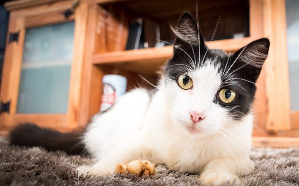 Imagen de un gato