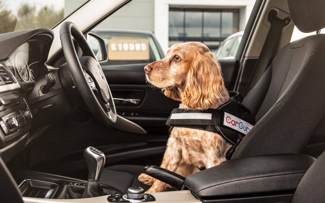 Imagen de un Perro al Volante