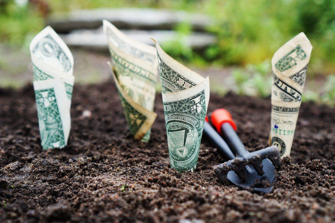 Billetes de dólares enterrados en la tierra como si estuviesen brotando